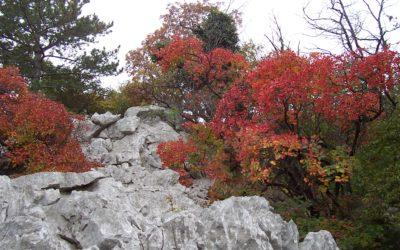 L'autunno a Trieste è ricco di sapori e colori!