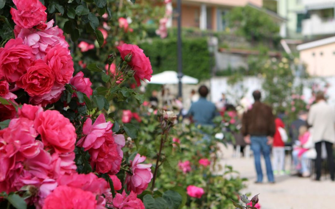 Primavera a Trieste