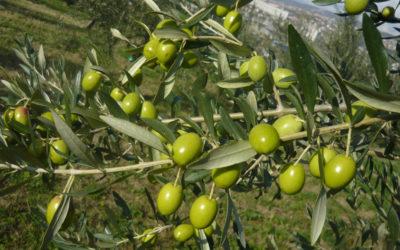 Una giornata tra Trieste e Muggia con degustazione Olio del Carso
