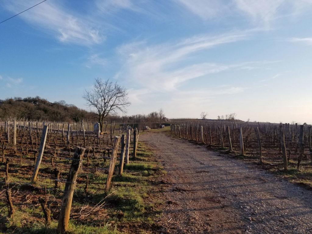 Vigne Azienda agricola Lupinc